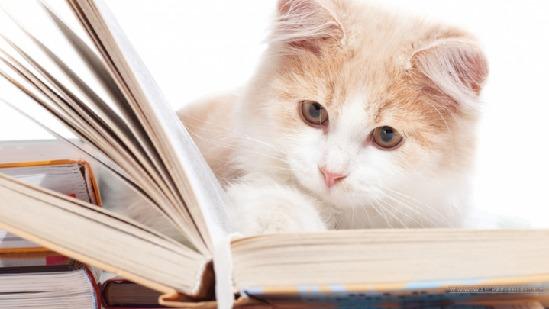 猫是唯一最终把人类驯服的动物。最近在微博上,这句首见于法兰西学院院士弗雷德里克维杜所著的《猫的私人词典》的这句话最近被广泛引用,一事成为网络热门语。 事实上,可爱的猫咪正在以迅雷不及掩耳之势席卷市场,乖萌可爱又有些高冷的猫,成为了不少人饲养的首选。而除了养实体猫之外,线上云养猫也正在成为一些人的选择,并在网络上引发热潮,人们不仅用各种猫咪的照片作为头像,光临各种猫咪主题的咖啡厅,还频繁关注一批又一批宠物博主,甚至不惜花钱去打赏。 对此浙江工商大学MBA学院院长乜标表示:随着互联网时代的到来,养